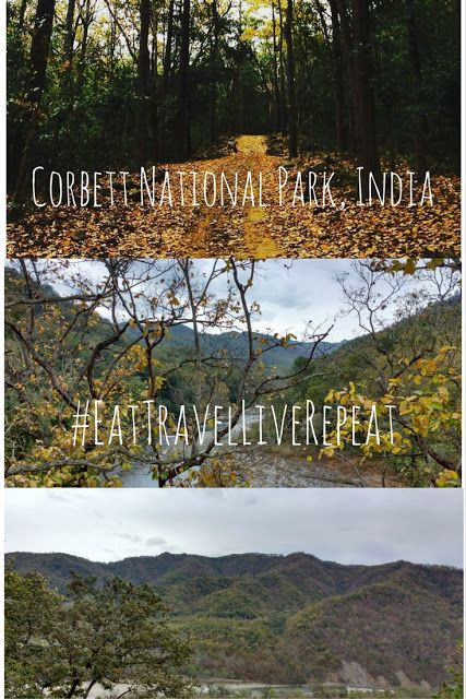 Eat, Travel, Live and REPEAT: A weekend in the jungles of Corbett National Park