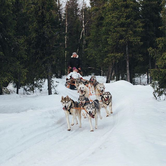 Only happy when they run. @ourfinland #visitfinland @levilapland #levilapland