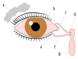 I need to look into this. Improve Eyesight With Eye Exercises And Eye Vitamins http://www.lshf.org/