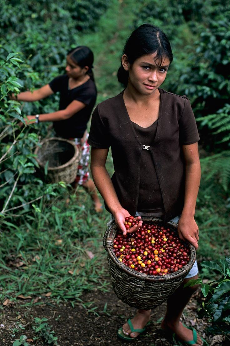 Girl with coffee beans, La Fortuna, Honduras
