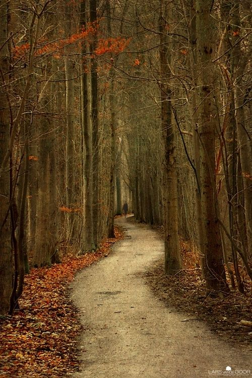 Eerie woodlands