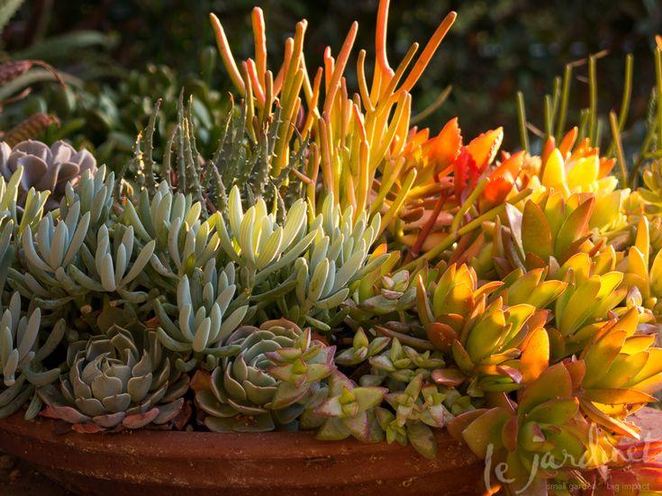 Bom dia o senhor est comigo nada temerei salmo 118 1 12 na verdade s deus d verdadeiro - Succulent container gardens debra lee baldwin ...