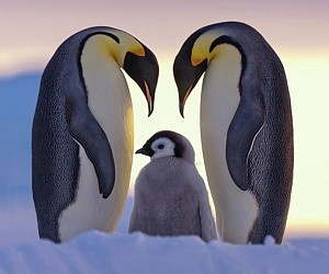 Best images From Natgeo