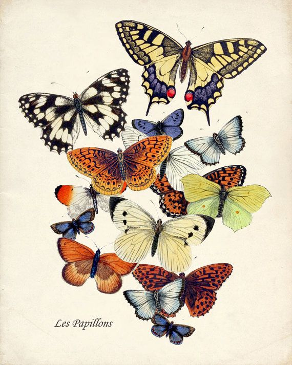 Butterfly Garden Art Print Collage Natural by HighStreetVintage
