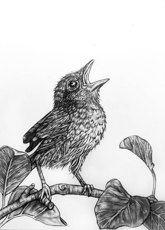 Bird Original Pencil Drawing Illustration - 72 singing bird