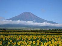 花の都ギャラリー | 山中湖花の都公園 - 富士山・山中湖観光スポット