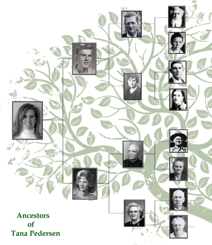 41 best Pedigree Charts images on Pinterest Family tree chart - family tree example