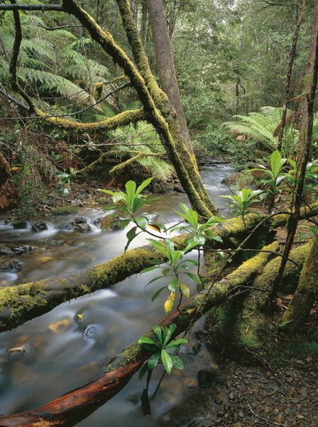 Lady Barron Creek, Mount Field National Park, Tasmania. (Photo: Getty)