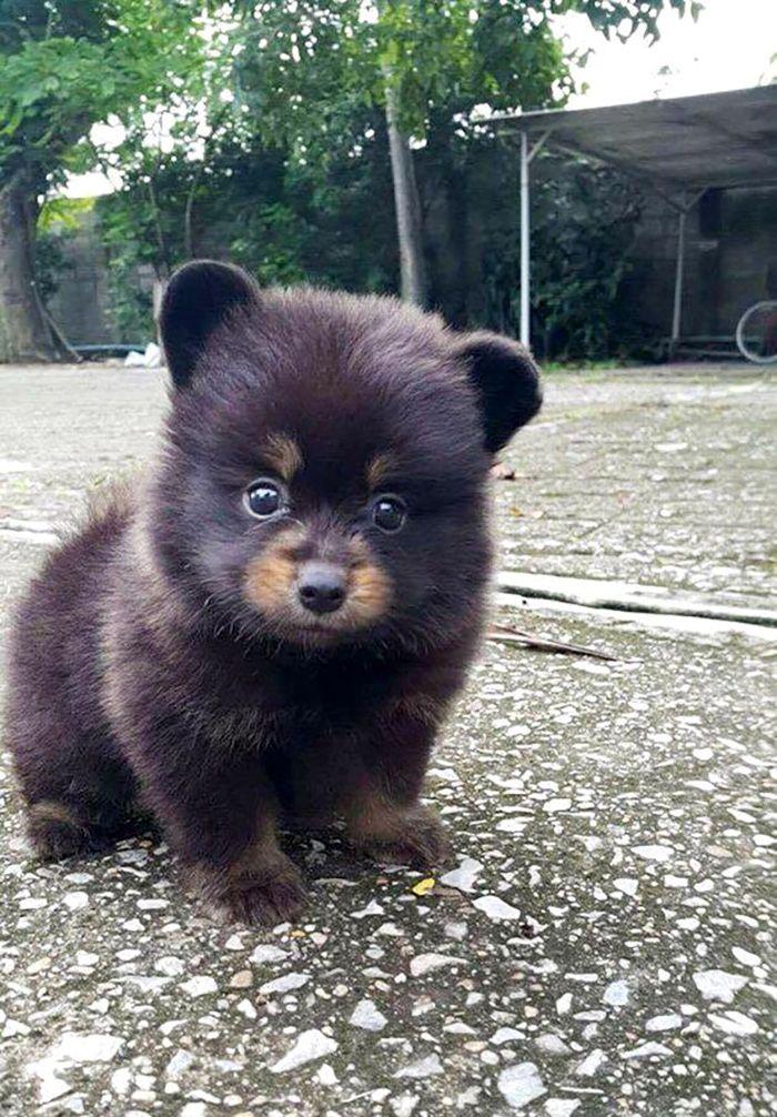 So a bear and a dog walked into a bar... | PostKitty