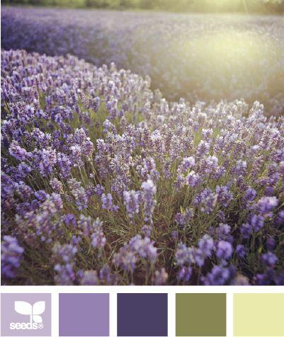 field huesDesign Seeds, Lavender Fields, Bedrooms Design, Fields Hues, Dark Purple, Painting Colors Schemes, Purple Bedrooms, Bedrooms Decor, Master Bathroom