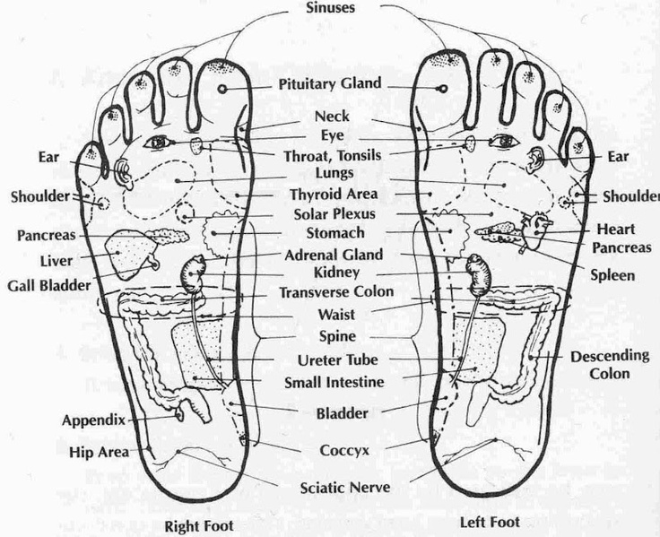 Acupressure feet points. Shiatsi, acupuncture points. Alternative therapies. Foot points.
