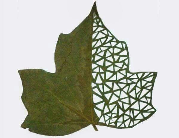 الرسم على ورق الشجر Leaf Artwork Leaf Art Dry Leaf Art