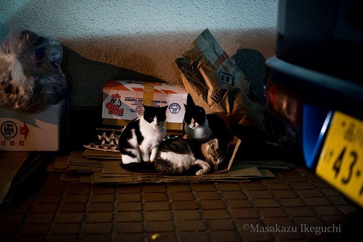 BLOG「路上のルール」 〜東京の街に暮らす野良猫たちの記録写真〜: 冬の夜