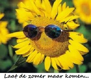Vanaf morgen volop leverbaar #zonnebloem