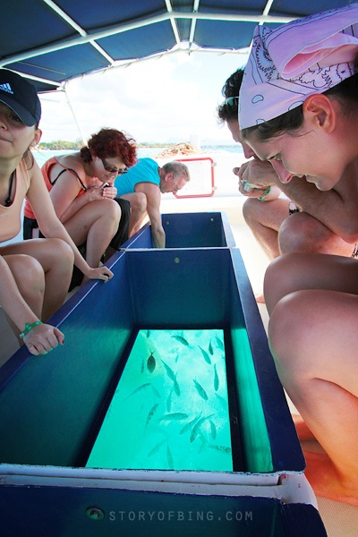 Glass bottom boat trips and snorkling