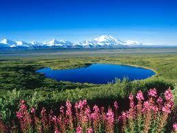 tundra pond ...