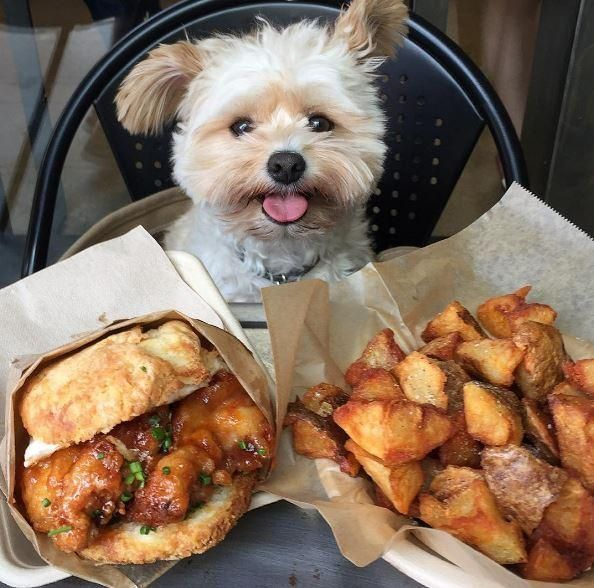 (XPost from raww) Honey Sriracha Chicken Biscuit Sandwich with fried potatoes [594 x 588]