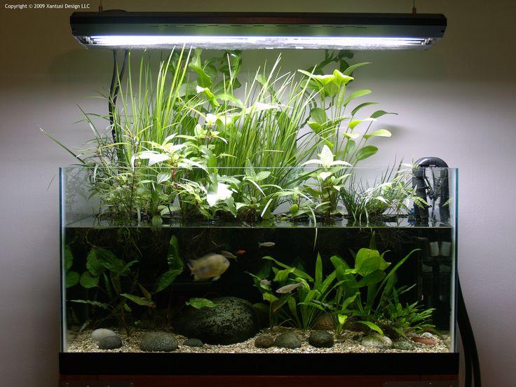 Projet aquarium débutant 7405e9d6dcbcdec54795132dc62b9648