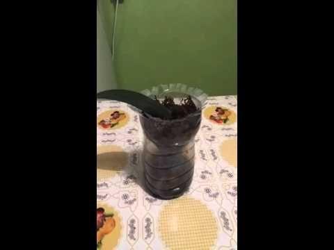 Простейший способ наращивания корней у орхи - YouTube