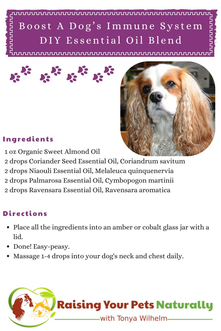 296 best diy for pets images on pinterest pet treats for dogs