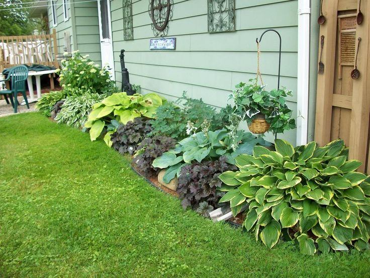 Hosta,cora Bells Heucera,primula,bleedign Hearts. Annebelle Hydranga,shade Garden Photo:  This Photo was uploaded by homegardenbon0. Find other Hosta,co...