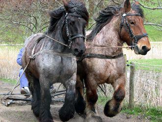 Werk paard