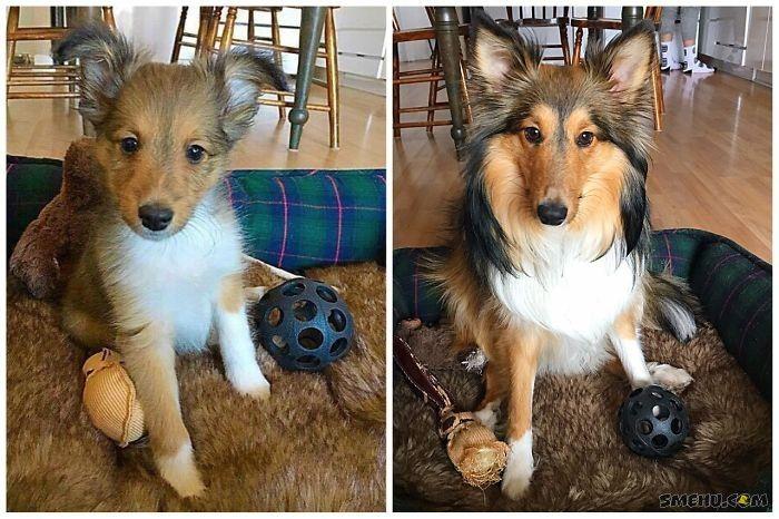 Фотографии собак маленькими и большими, когда выросли — Smehu.com