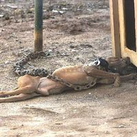 Rockingham County NC: Change the animal cruelty laws. PLEASE SIGN PETITION so we can get the cruelty laws changed...thank you