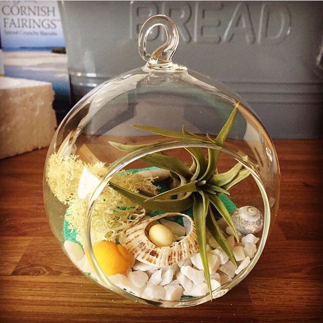 Beautiful turquoise sand globe terrarium with a Brachycaulus Adbita, by the lovely Ms K.M. in Newquay, Cornwall