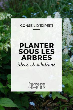 16 best le jardin images on pinterest backyard ideas container plants and gardening. Black Bedroom Furniture Sets. Home Design Ideas