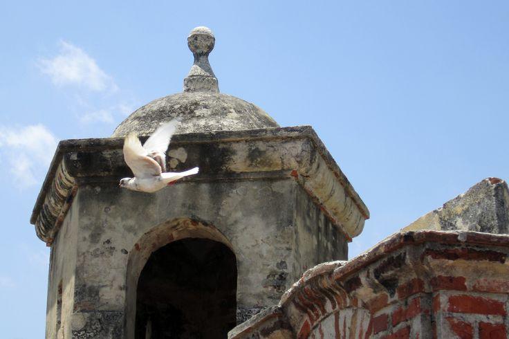 Paloma blanca, Castillo San Felipe de Barajas, Cartagena de Indias, Bolivar Colombia. July 2014 ©Kate Dana