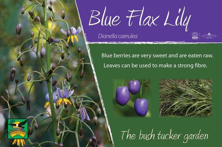 australian bush flower essences pdf free download