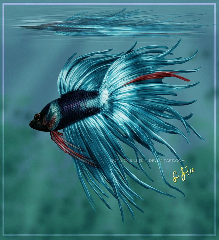 17 best images about betta art on pinterest heaven for Betta fish painting