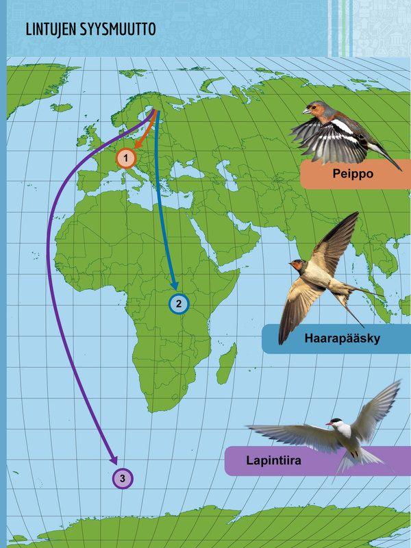 Lintujen muutto. 1. Peippo ja rastaat talvehtivat Länsi- ja Etelä-Euroopassa. 2. Haarapääsky ja monet muut hyönteisiä syövät linnut muuttavat Afrikkaan.  3. Lapintiira lentää aina Etelämantereelle saakka.