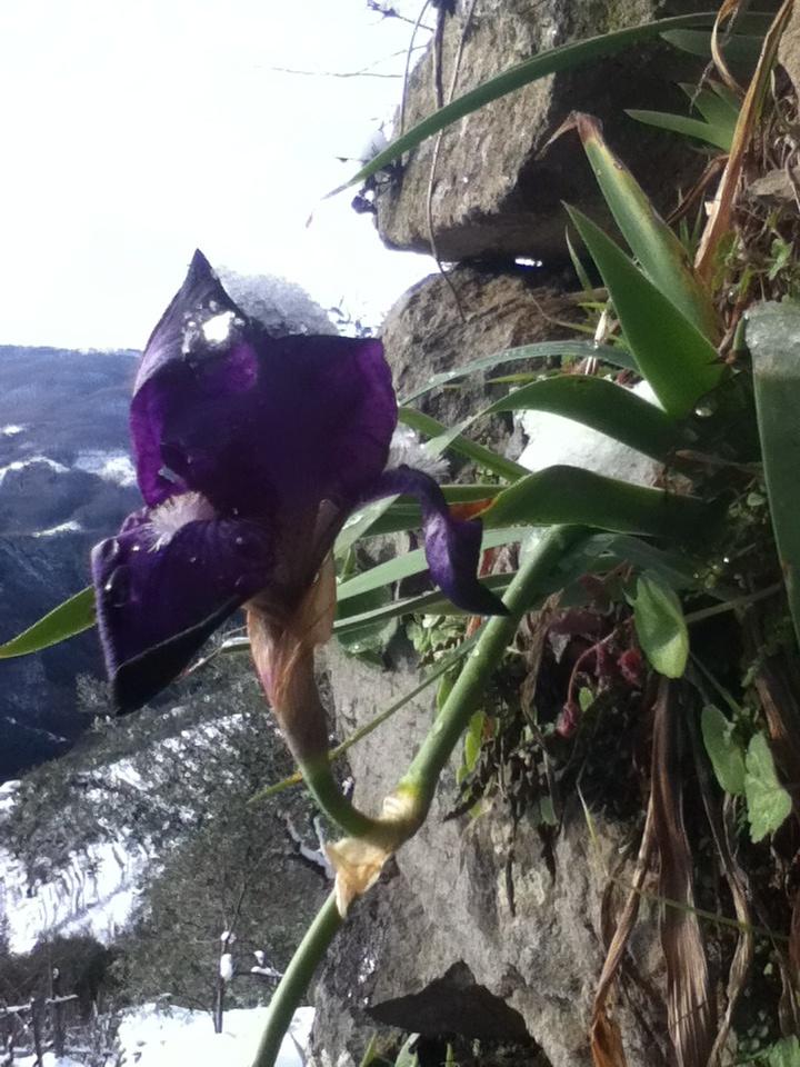 Brave little flower