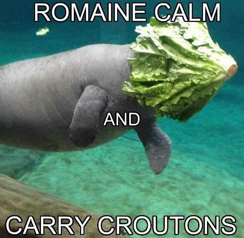 Funny Manatee Meme : Celebrate manatee appreciation day with our favorite sea