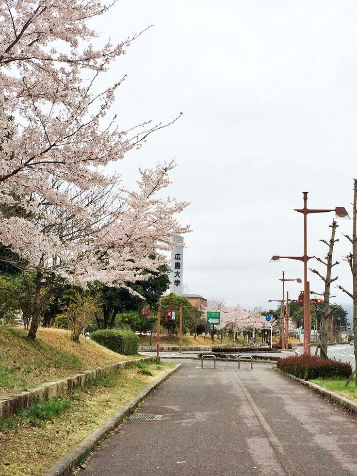 広島大学 (Hiroshima University) from afar