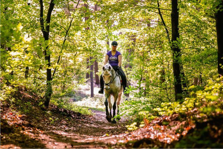 Op stap in het mooie Leuvenumse bos