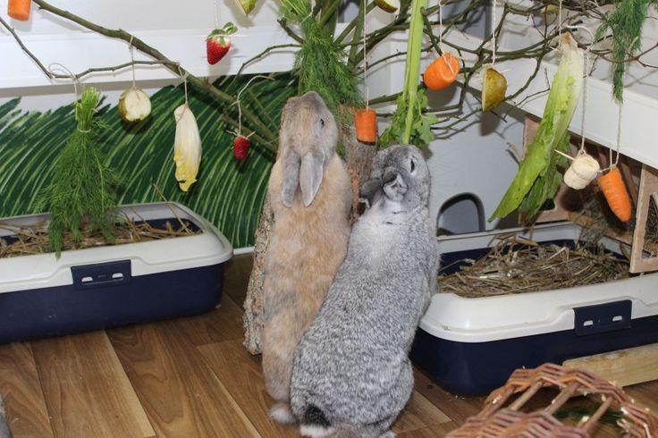 kaninchen fütterung