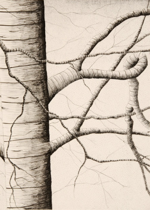 Contour Line Drawing Tree : Best contour drawings ideas on pinterest blind
