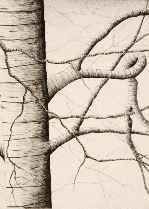 Contour Line Drawing Objects : Best art lesson ideas contour line images on