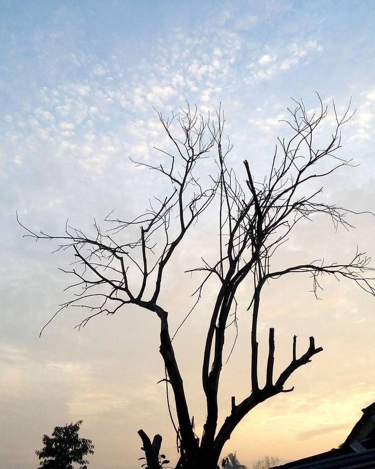 Sosok Kak Wari Dimata Alex Noerdin Memang benar adanya pemilihan umum atas gubernur dan wakilnya di wilayah Sumatera Selatan pada tahun 2018 nanti. Jika dihitung dari tahun 2016 ini tentu saja hari H tersebut masih lama. Tetapi nyatanya nama-nama kandidat bakal gubernur di daratan Palembang ini telah bermunculan. Aswari adalah salah satu tokoh yang paling ternama itu. Menjabat sebagai bupati kota Lahat dan di tahun ini sampai 2018 dalam periode keduanya sosok bernama lahir Saifudin Aswari…