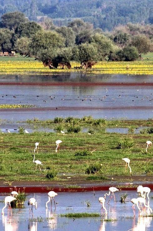 Kerkini lake, Macedonia Greece