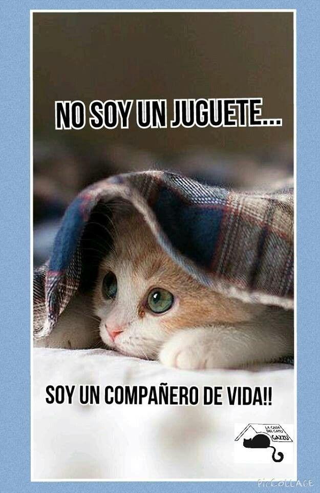 'No son juguetes, son compañeros de vida y para siempre...' #EstrechaSuPata #NoAlMaltratoAnimal De La Casa del Gato Gazzu en Facebook.
