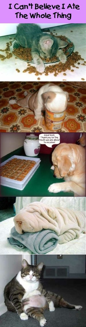 I Can't Believe I Ate The Whole Thing: Lindsay Boards, Doggies Dogs, Funny Things, Animal Photography, Doggy Dogs, Cutie Pies S, Funny Animal, Soooo Funny, Funny Pin