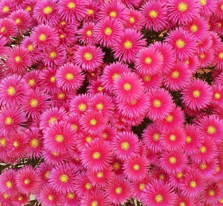flowers...many flowers