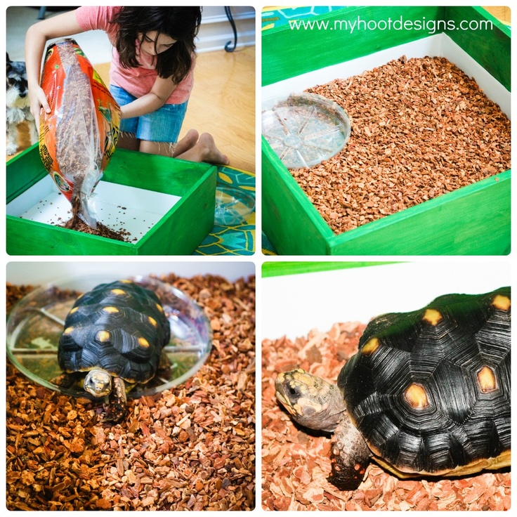 Hoot Designs: Wood Turtle Box Tutorial {Red Footed Tortoise}