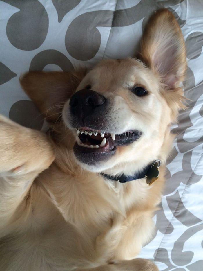 Confira as fotos de Wesley, o cão de aparelho.