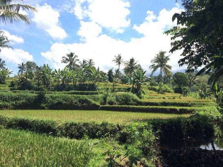 Rice terraces at Tetebanu, Lombok