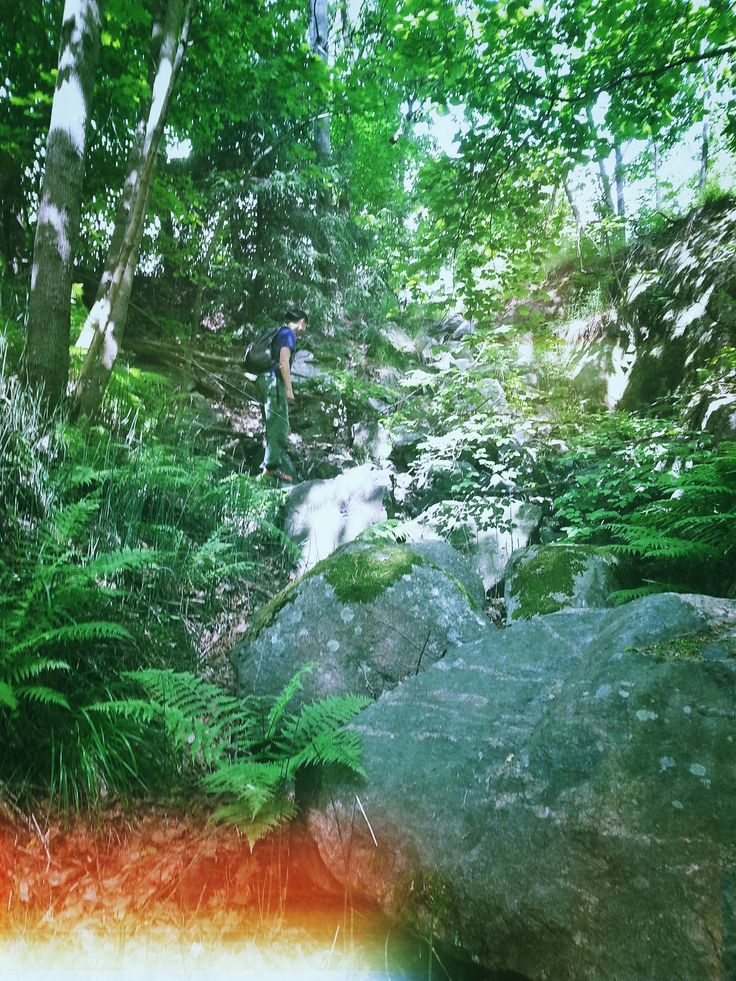 Forrest hike with Alexander